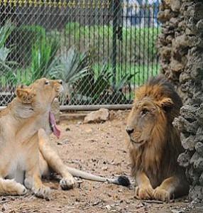 visit to karachi zoo