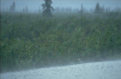 Heavy rain fall on deserted road