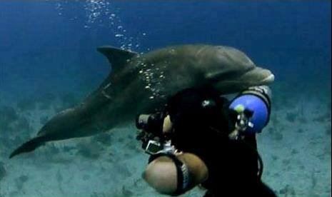 love of dolphin for swimmer