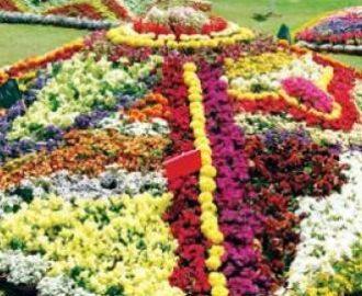 Flower Show