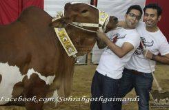 Sohrab Goth Gai Mandi photo