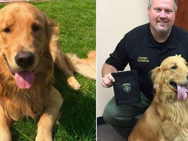 officer-dog