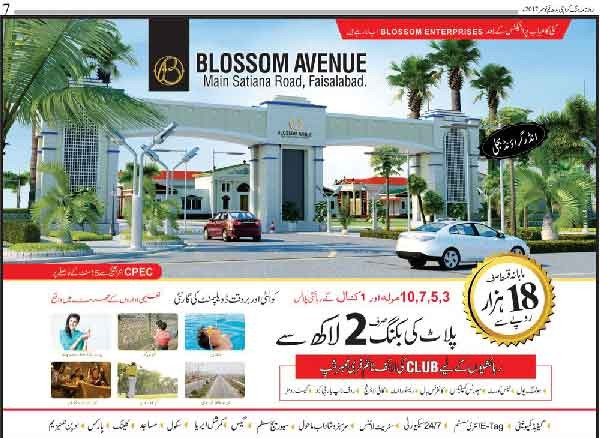 Faisalabad Blosson avenue